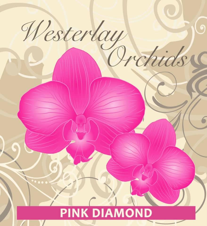 Westerlay Orchids Pink Diamond